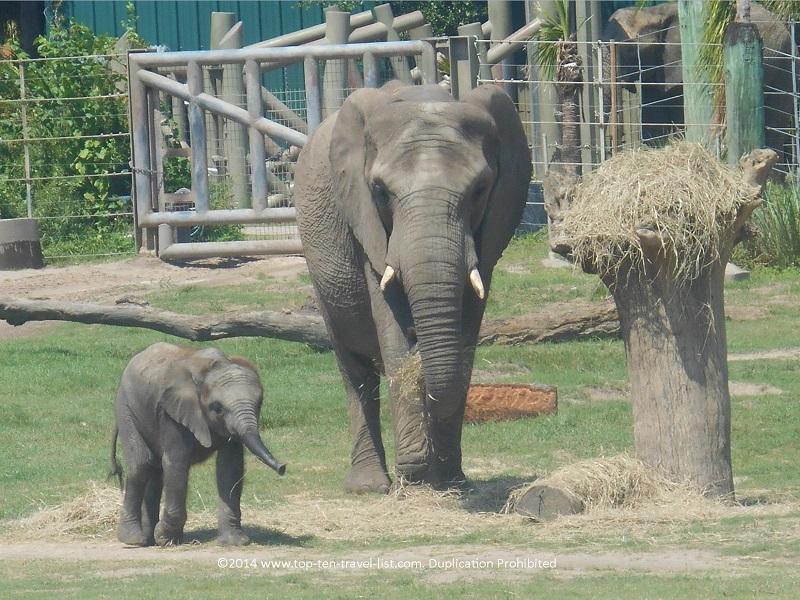 Bay Hotel introduces Saigon Zoo for tourists